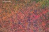 _ADR4656-62 me autumn colors w.jpg