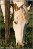 _ADR9943 horse wf.jpg
