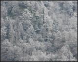 _ADR9196 spring snow wf.jpg