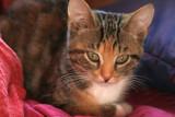 Lily nine weeks