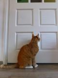 Jinx waithing for the door