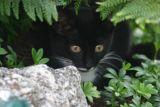The new cat Roxy