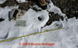 Beaver tracks near Chew