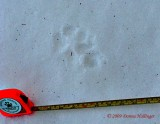 Datapoint 5 fox Track
