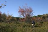 Nancy and main wetland