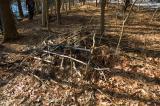 Beaver Wood Pile