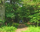 The group at Bear tree