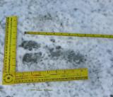 tracks.pond.1097.jpg