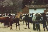 The famous bull market of Celendin -- horses are sold, too! Do you want to buy a Paso Fino