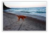 ollie at dawn on Agawa Bay
