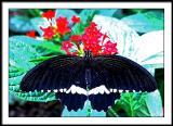 apr 4 butterfly