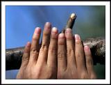 apr 9 fingers
