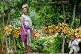 Banana seller, Douala-Bamenda road