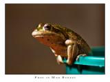 Frog in Mah Bukket #1