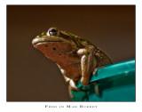 Frog in Mah Bukket #2