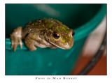 Frog in Mah Bukket #3