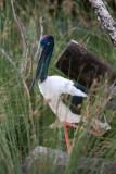 Perth Zoo Australian Wetlands Enclosure
