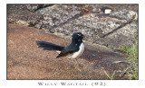 FEARLESS. (Willy Wagtail #2)