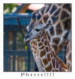 Phtttt