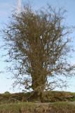 Tree Reflection 1.JPG