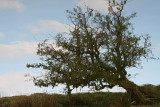 Tree Reflection 2.JPG