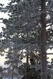 Finlandia_2798.jpg