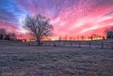 Grateful Dead Sunrise