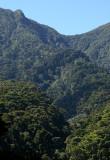 cloud forest landscape
