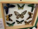 Butterfly exhibit (outside the Museum)