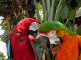 Sign said: Greenwing (left) and Catalina Macaw (right)