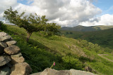 Countryside Lake District 38
