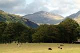 Sheeps Trees  Mountains