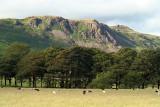 Sheeps Trees  Mountains 02