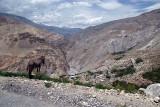 33 Donkey Admiring the View near Nako