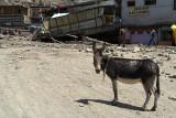 Donkey Caked in Mud Leh