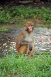 Monkey at Pashupatinath