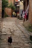 Chickens in a Lane Bhaktapur