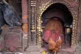 Goat and Chicken in Shrine