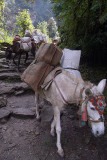 Mules on the Path from Ghorepani