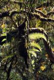 Sunlit Ferns on Tree