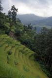 Terraced Rice Field near Tikhedhunga