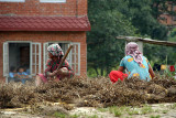 Women Thrashing Peas Bhaktapur