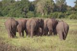 Elephants at Kaudulla