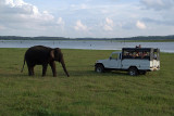 Elephant and Jeep Kaudulla