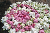 Pink and White Flower Offerings
