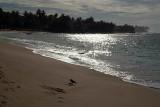 Unawatuna Beach 04