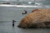 Leaping from the Rocks Galle