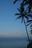 Early Morning Palms at Varkala