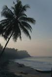 Palm Trees and Varkala Beach
