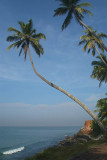 Palm Trees on the Cliff Varkala 03